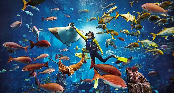 Explore the marine life at Atlantis Dubai