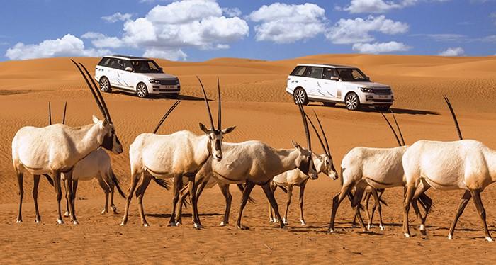 Explore the desert of Dubai this Christmas