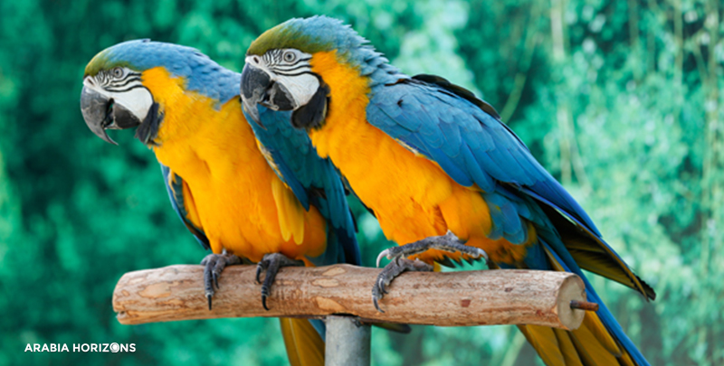 Bird Show in Creek Park, bird show dubai, Dubai creek park
