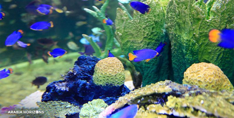Dubai Aquarium & Underwater Zoo, dubai aquarium and underwater zoo, dubai aquarium, dubai underwater zoo