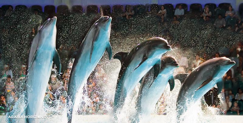 Dubai Dolphinarium, dolphin show dubai