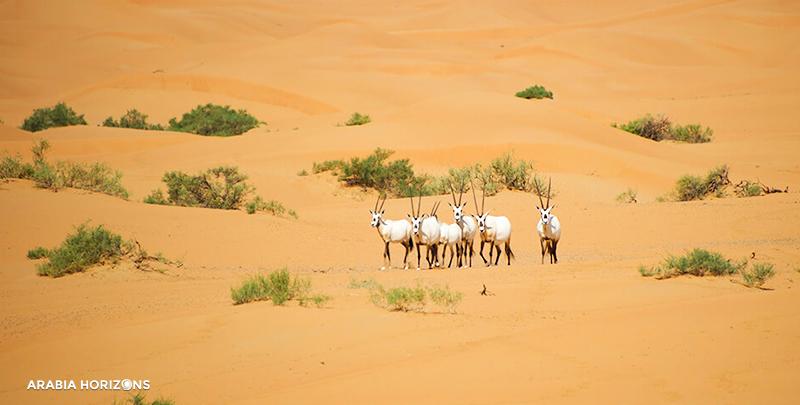 Platinum Conservation Drive in Al Maha, Al Maha Dubai, Desert Dubai