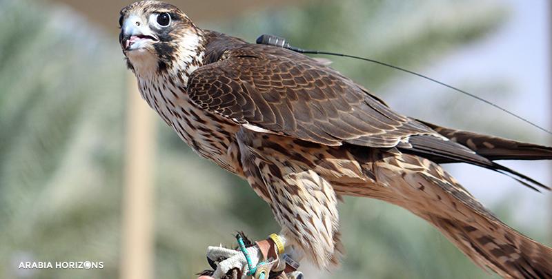 Private Interactive Falconry with Breakfast in Al Maha, Al Maha Desert, Desert Dubai, falcon show